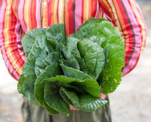 Collard greens from Flying Cloud Farm