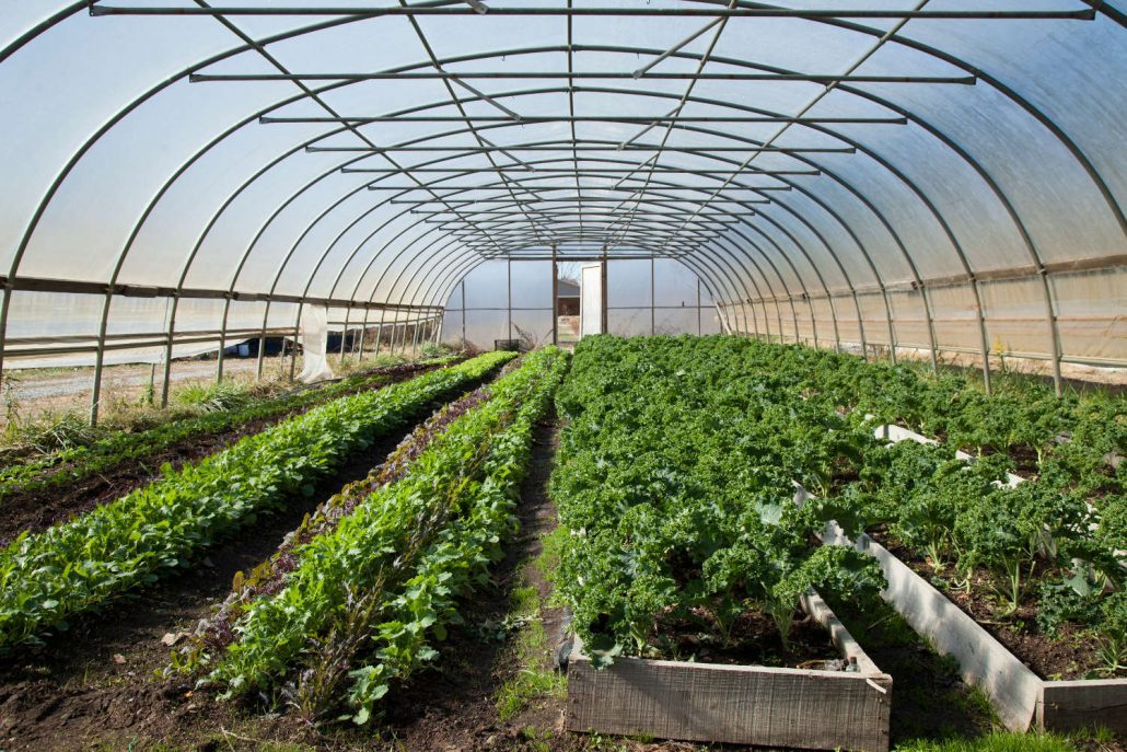 The hoop house at Ivy Creek Farm in Barnardsville, North Carolina