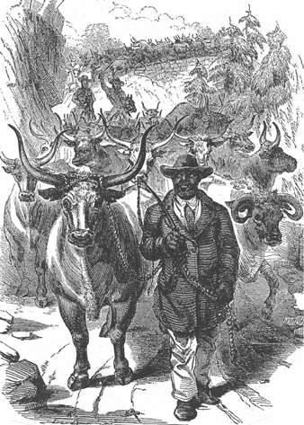 Historic cattle drove on the Poinsett Bridge